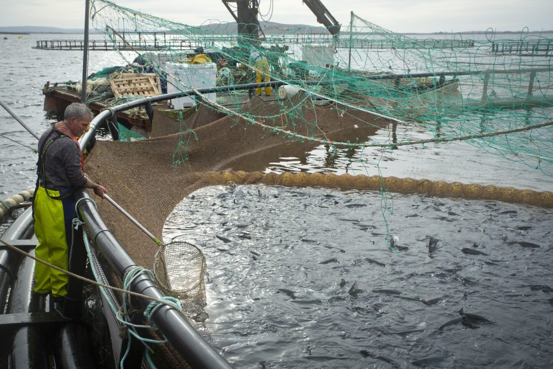 Export Credit Norway Finances The Sale Of Fish Farming